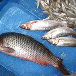 Эксперты приценились к рыбе