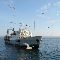 Рыболовное судно ведет промысел на Дальнем Востоке
