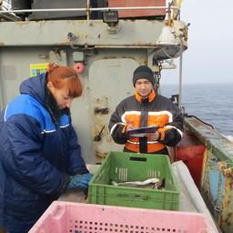 Ученые разбирают улов. Фото пресс-службы АтлантНИРО