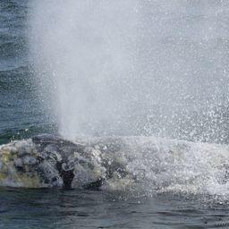Душ для морских биологов. Фото пресс-службы ФГБУ «Кроноцкий государственный заповедник»