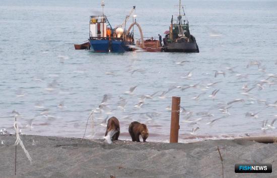 Дальний Восток опробовал новую технологию переработки рыбных отходов