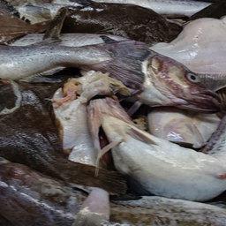 Сахалинскую «социальную» рыбу станут закупать на бирже