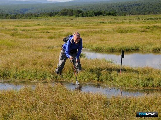 Отбор проб ветвистоусых рачков в болоте. Автор фото Федор Казанский