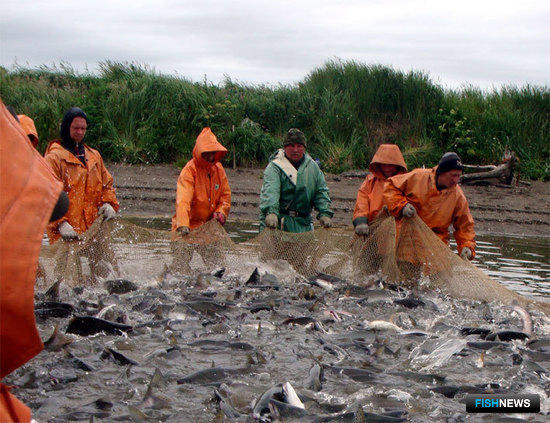 ФАС предложила дополнения в договор по рыбопромысловым участкам