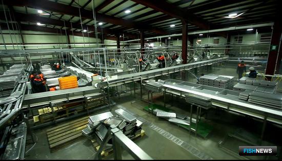 На российских предприятиях внедрены линии непрерывной переработки лососевых NAG-501