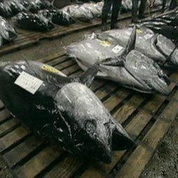 Европейский суд на страже тунца