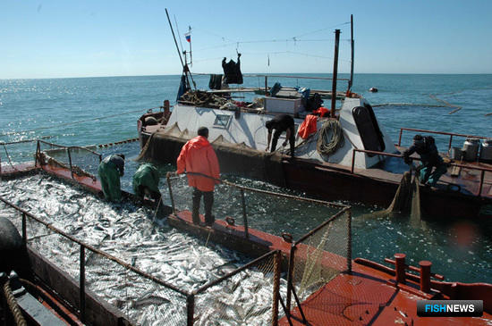 Кризис не помешал Камчатке развивать рыбное хозяйство