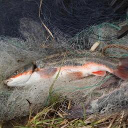 У нелегальных рыбаков хотят отбирать сети до суда
