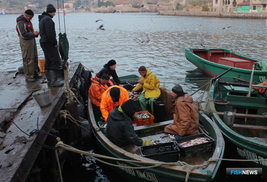 Сортировка рыбы у причала в Балаклаве