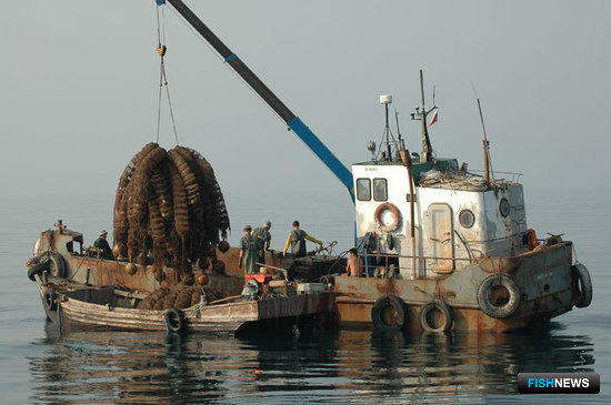 Зачем нашей стране аквакультура