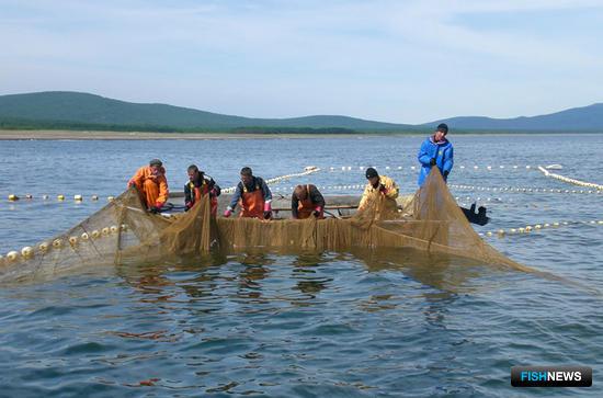 Компания «Тройка» осваивает на севере Приморского края лососевых, камбал, терпугов, ламинарию, лобана, красноперку, корюшку