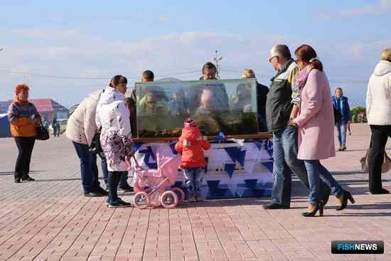 На фестивальной площадке был установлен открытый аквариум с крабами, морскими ежами, медузами и морскими звездами. Фото пресс-службы правительства края