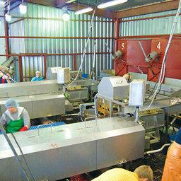 В сахалинском ООО «Антрацит» работают уже три линии непрерывной переработки лососевых NAG-501