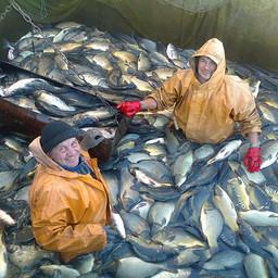 Сбор «урожая» на Медведицком экспериментальном рыборазводном заводе. Фото пресс-службы предприятия