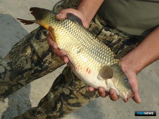 Прудовая рыба – ключ к реализации госпрограммы