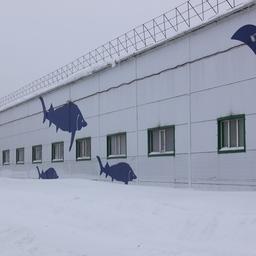 В Самарской области начало работу предприятие по воспроизводству стерляди и щуки. Фото пресс-службы ФАР
