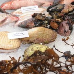 Выставка «Перспективы развития рыбной отрасли-2010»