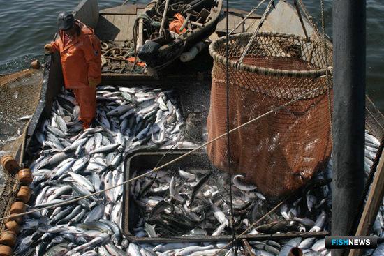 Техрегламент с ветеринарным уклоном не устраивает рыбаков