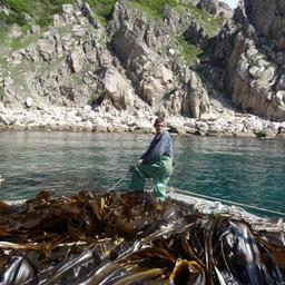 Сбор урожая морской капусты с донных плантаций. Фото – пресс-службы ПБТФ.