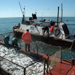 Перекрестки и тупики на путях проводимых ВНИРО реформ российской рыбохозяйственной науки