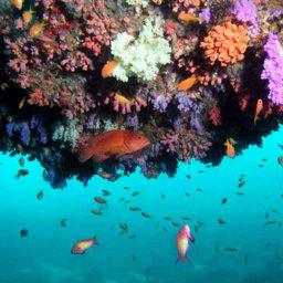 В центре внимания – рифы