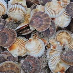 Росрыболовство планирует изменения по рыбоводным участкам
