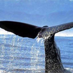 Увидеть кита – хорошая примета