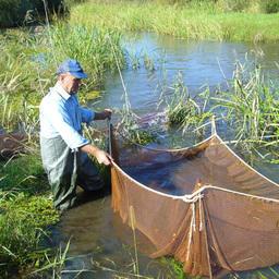 Государство решило поддержать «приграничную» аквакультуру ДФО