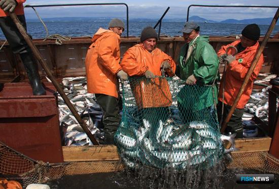 В Камчатском крае началась лососевая путина. Фото пресс-службы правительства региона
