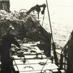 Плавбаза «Александр Обухов» перешла с минтаевой путины на лососевую. Виктор Белый после испытания минтаевой технологической линии собрался домой, а Екатерина Белая прибыла для отладки линии, обрабатывающей лососевые виды рыб