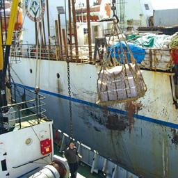 «Океанрыбфлот» на лососевой путине-2011