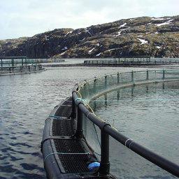 Аквакультура – одно из самых динамично развивающихся направлений деятельности в рыбохозяйственном комплексе Мурманской области