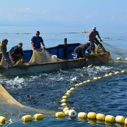 Рыбаки сверят позиции перед Госсоветом