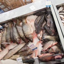 Свою продукцию представили рыбодобывающие и рыбоперерабатывающие компании из различных регионов