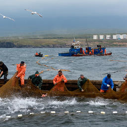 На Дальнем Востоке готовятся обновить правила рыболовства