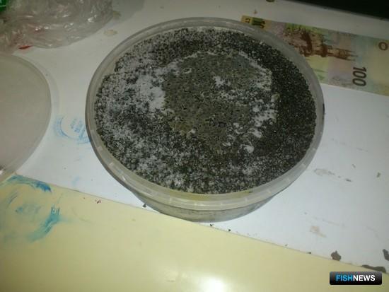 На квартире фигуранта уголовного дела изъяли черную икру. Фото пресс-службы Московско-Окского теруправления Росрыболовства