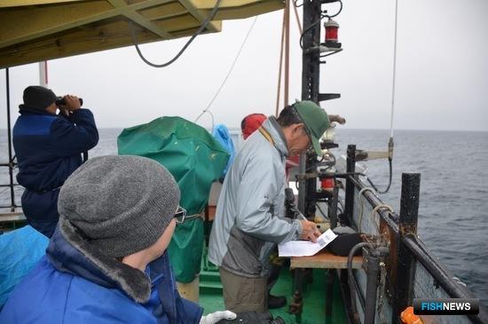 Исследования проводились в центральной и северной частях Охотского моря. Фото пресс-службы ТИНРО-Центра
