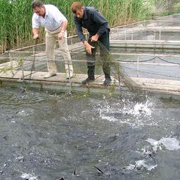 Рыбоводное хозяйство в Астраханской области