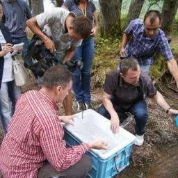 Молодые таймени отправились в русло реки Комиссаровка. Фото предоставлено ФГБУ «Сахалинрыбвод».