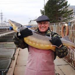 Заведующий лабораторией рыбоводства Евгений Рачек с кастером