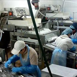 Линии скоростной головорезки и потрошения мелкой рыбы