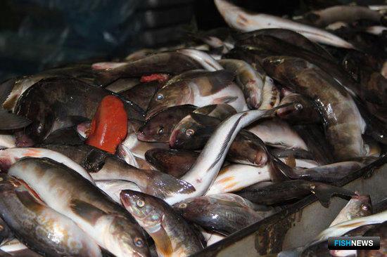 Рыба становится ближе