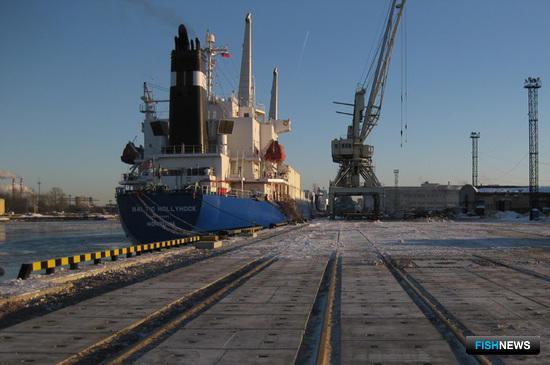 Морским рыбным терминалам – эффективность работы