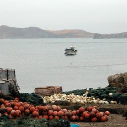 Аквакультурное хозяйство в Приморском крае