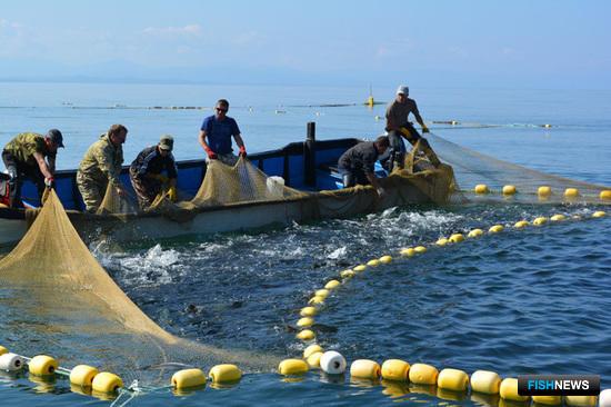 Рыбаки Сахалина ждут разрешения на постройку станов