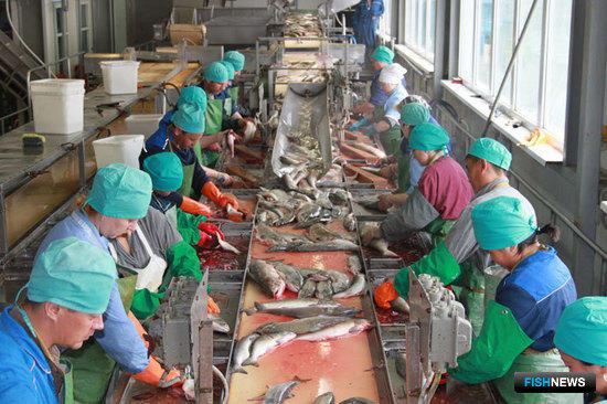 Камчатка проанализировала востребованность «рыбных» кадров