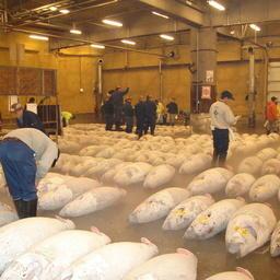 На рынке Цукидзи проходят знаменитые торги по замороженному тунцу