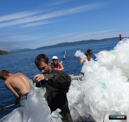 К работе по выставлению коллекторов для сбора личинок гребешка в бухте Мелководная подключились студенты-биологи ДВФУ. Фото – пресс-службы ПБТФ.