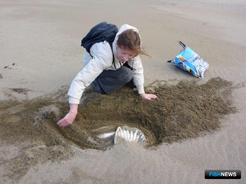 Находку почти полностью занесло песком. Фото пресс-службы государственного природного заповедника «Курильский».
