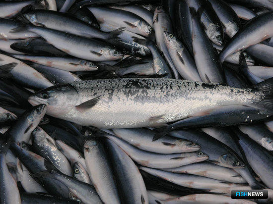 В РСПП изучат предложения по созданию рыбных бирж